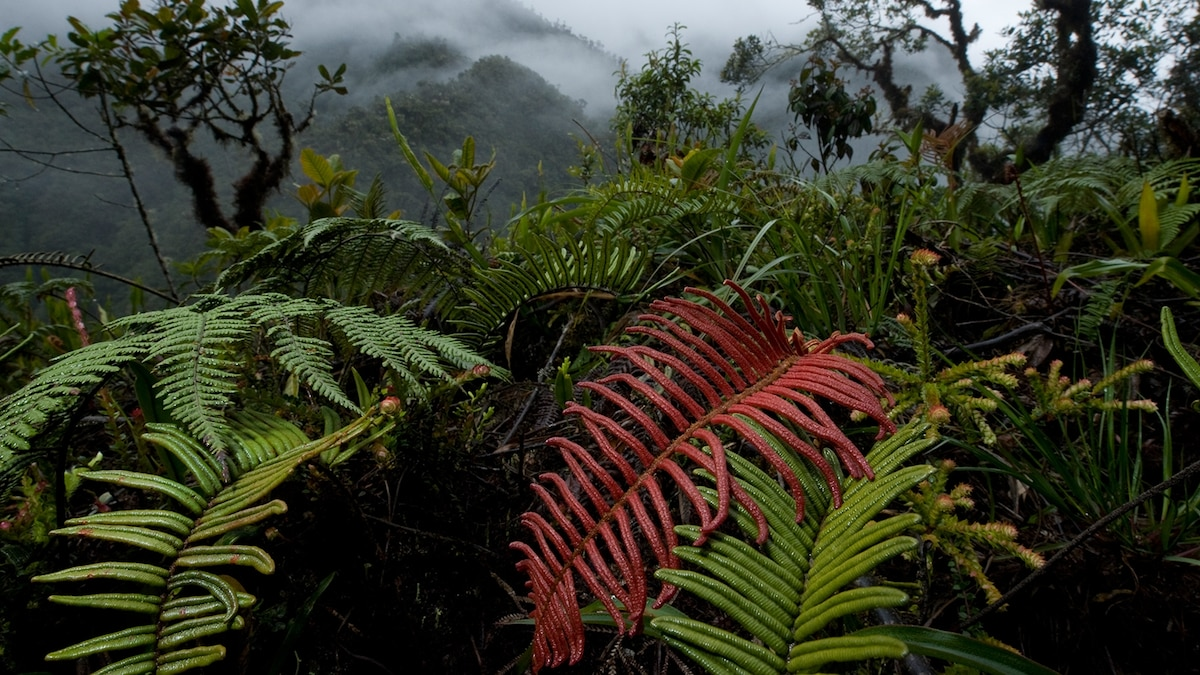 Ecuador Country Profile - National Geographic Kids