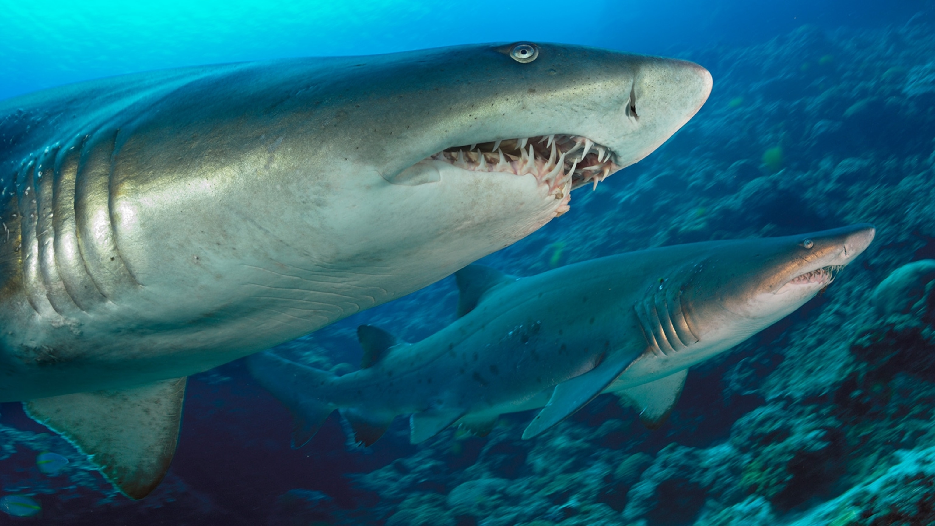 Ancient Shark's Lost Teeth From Millions Of Years Ago In Antarctica Recorded Earth's Climate History