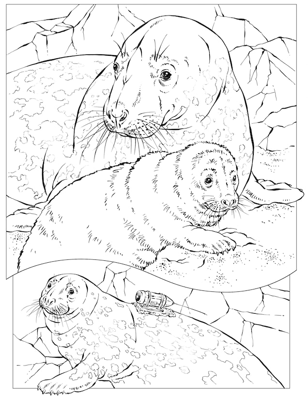 Coloring Book Animals A To I