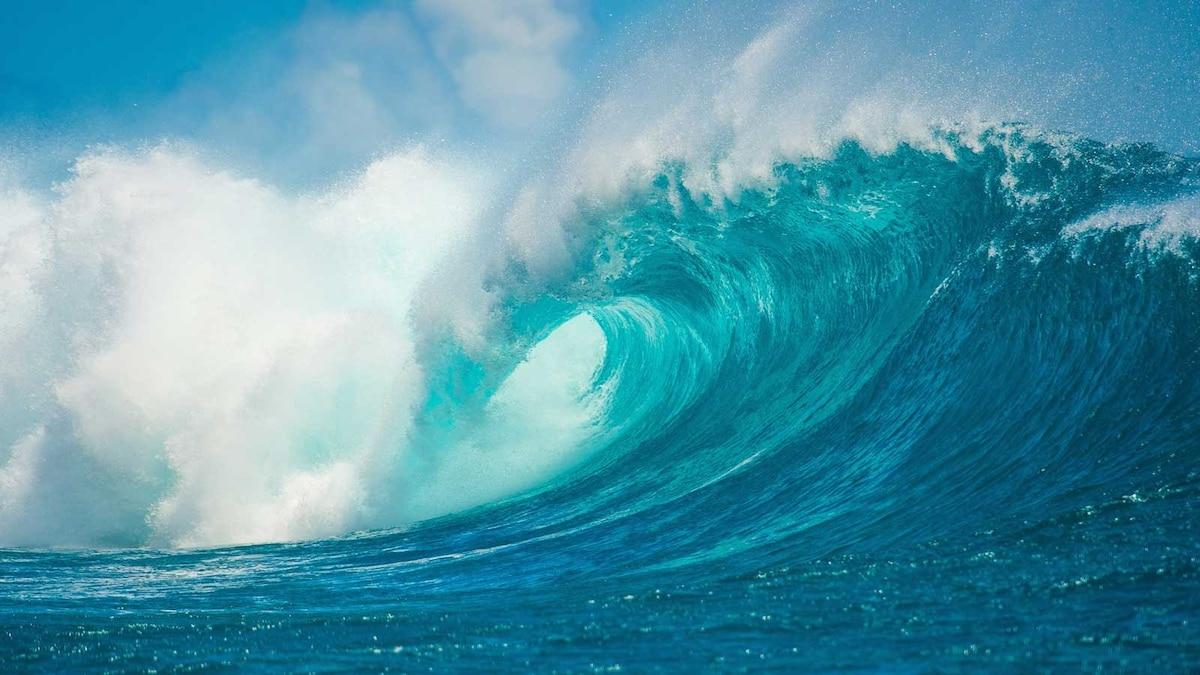 Ocean Habitat facts and photos