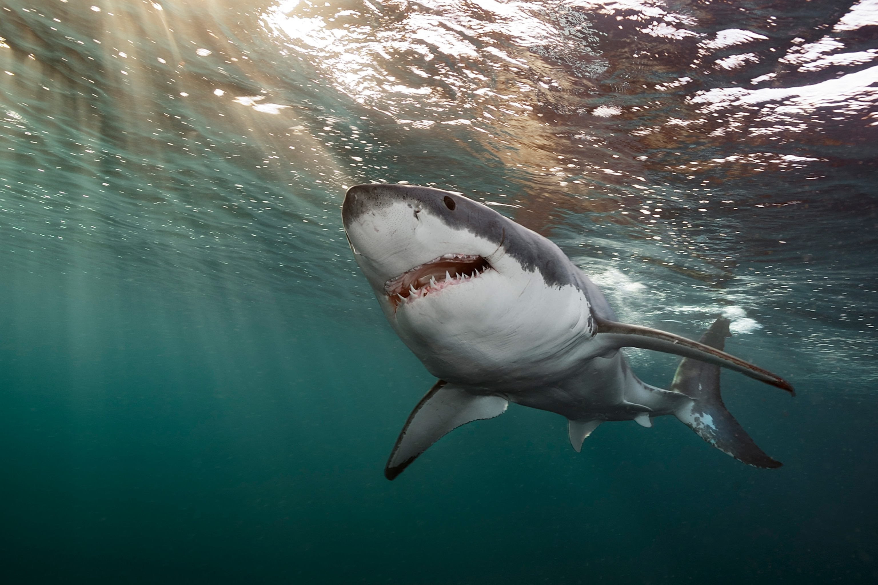 Shark Attacks Are More Common In The Atlantic Ocean