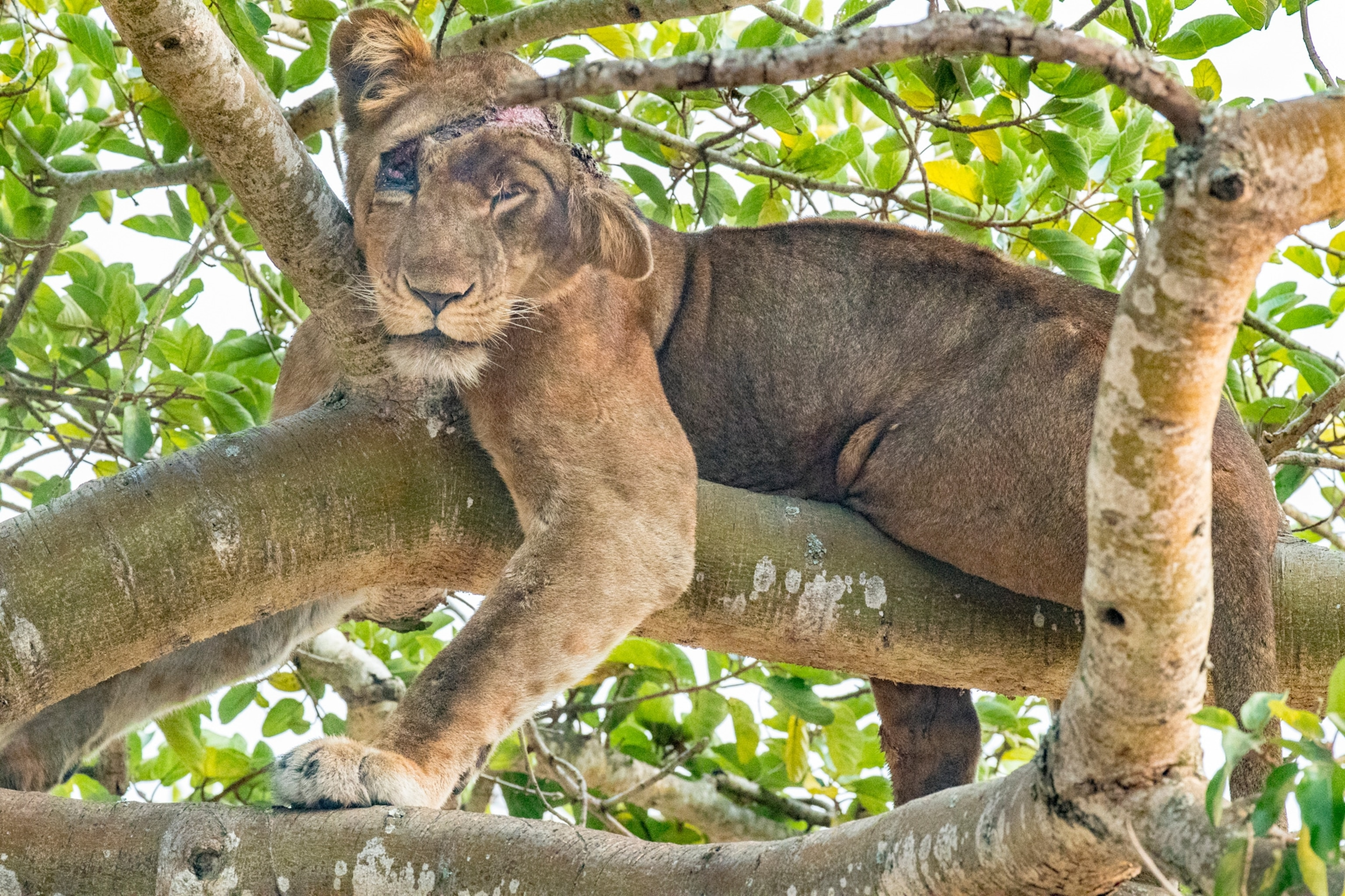 Petition: Punish Poachers Who Use Wire Snares To Destroy Wildlife