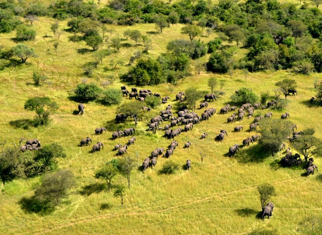 An aerial view of Tanzania's famed Serengeti National Park. A survey of the country's elephants shows a major population loss in recent years from poaching to supply the illegal ivory trade. Photograph courtesy The Great Elephant Census: A Paul G. Allen Project