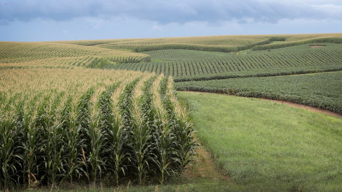 A farming boom is threatening U.S. climate and conservation goals