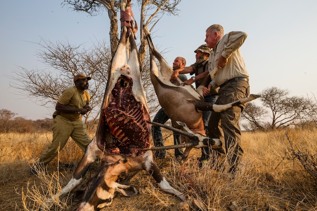 Poll: Should lion canned hunting be banned in South Africa?