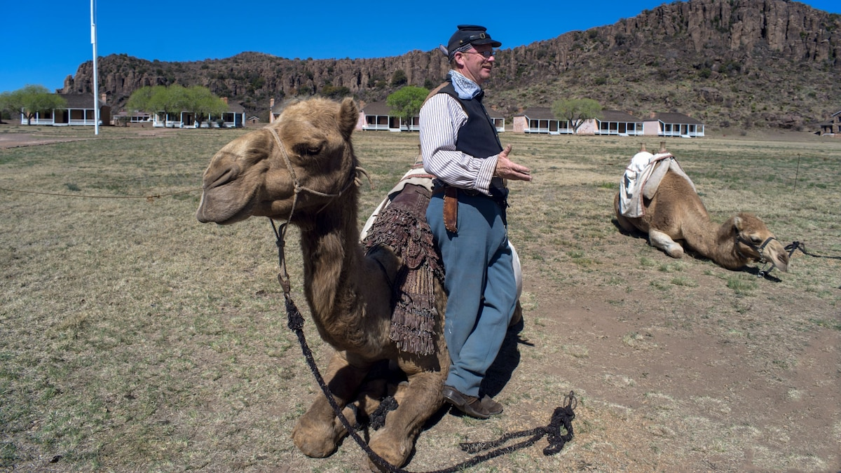 The sinister reason why camels were brought to the American West