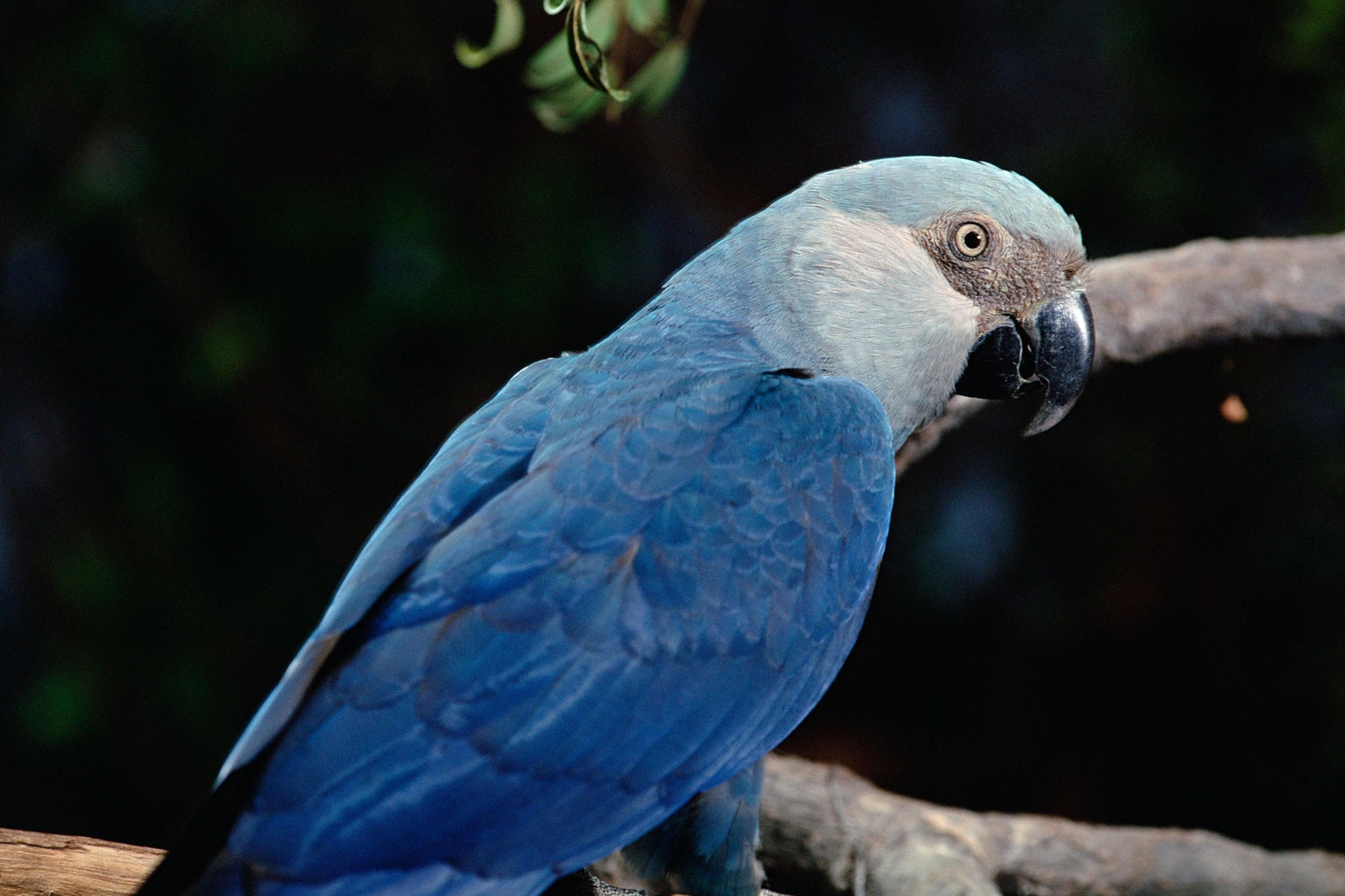 Extinct Species Blue