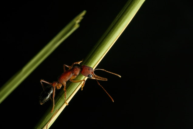 Picture of an ant on a green branch