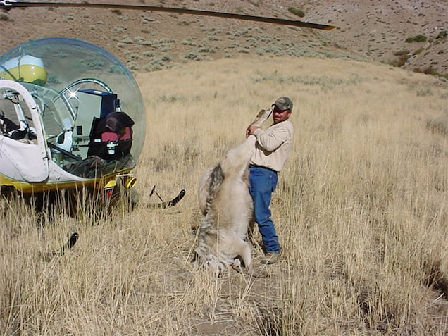 """POLL: Should Congress disband Wildlife """"Killing"""" Services?"""