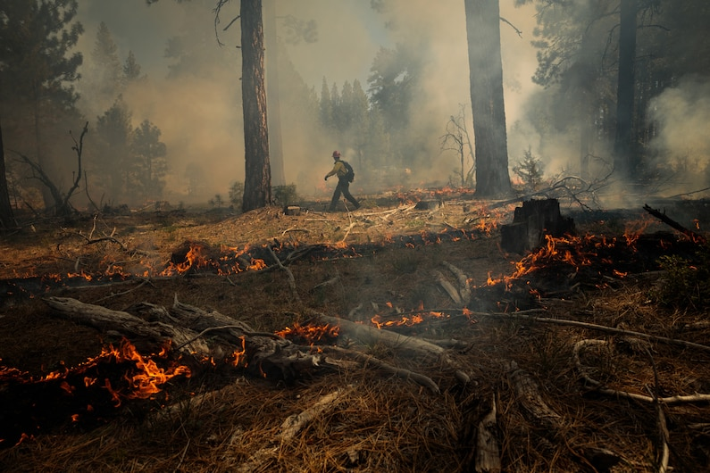 a prescribed burn is monitored by a National Forest technician in California