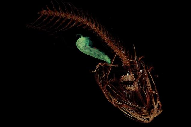 Imágenes de TC que muestran el esqueleto del pez