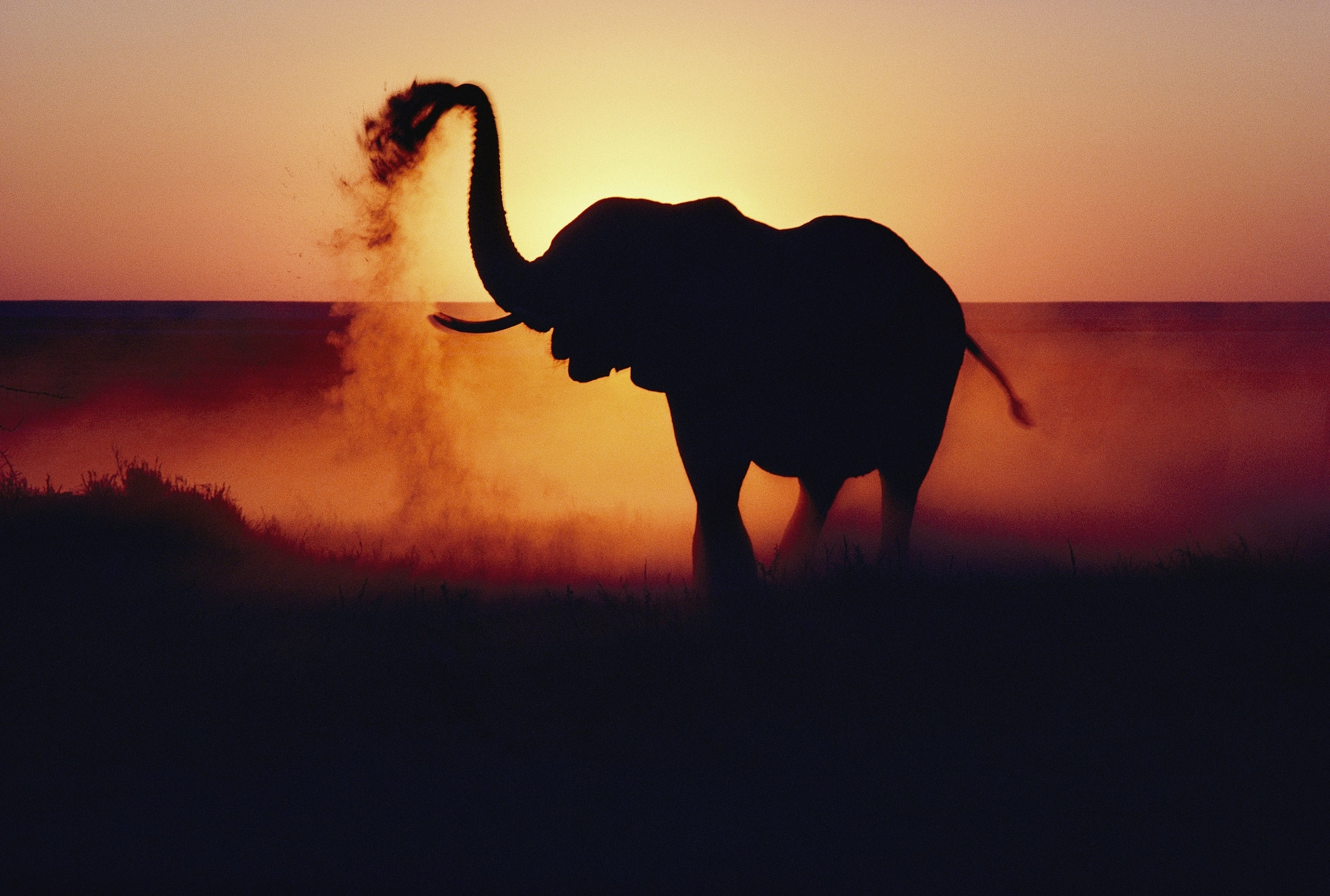 An elephant tosses dust on its hide as protection against the African sun on the flats of the Etosha Pan, a prehistoric lake bed in Etosha National Park - Photograph by Annie Griffiths, National Geographic Creative