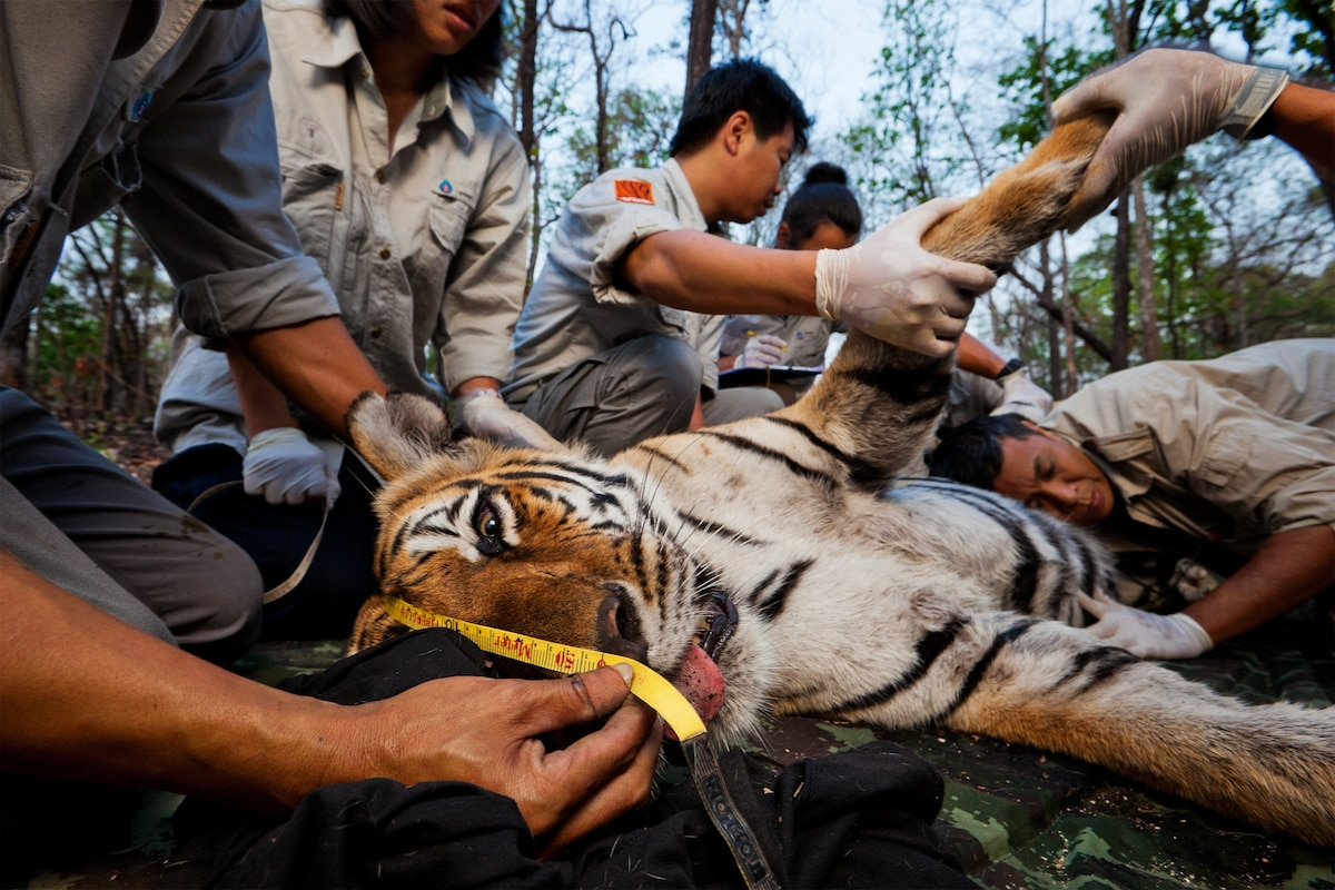 """""""Cyberpoaching"""" Feared as a New Threat to Rare Wildlife"""