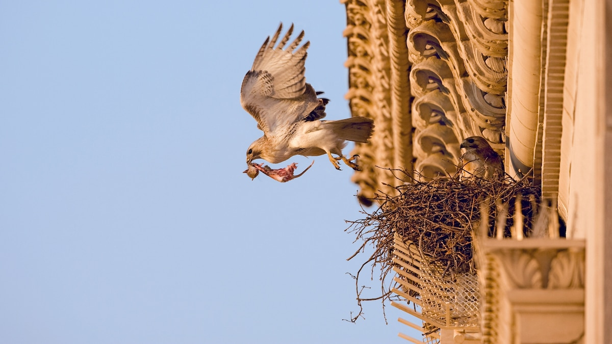 Birds flocked to cities during COVID-19, rapidly adapting to lockdowns