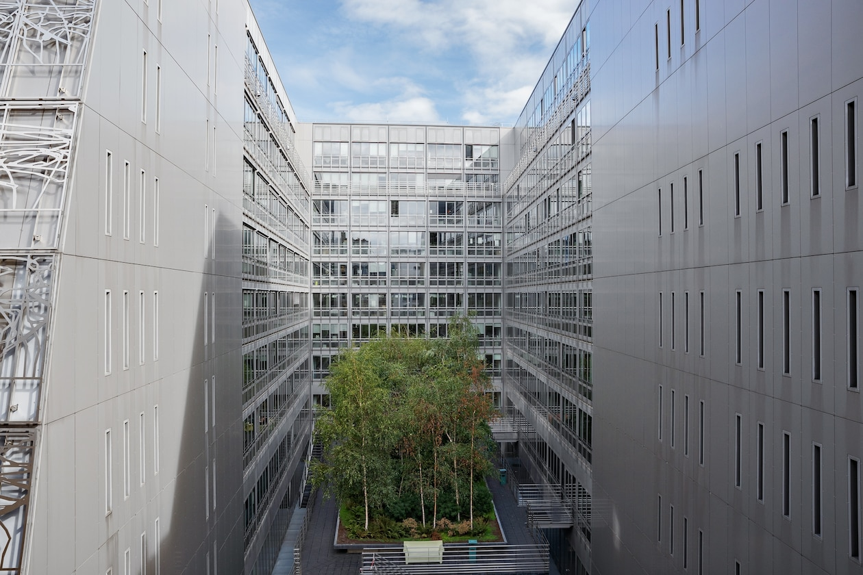 Picture of green space on courtyard between two tall buildings