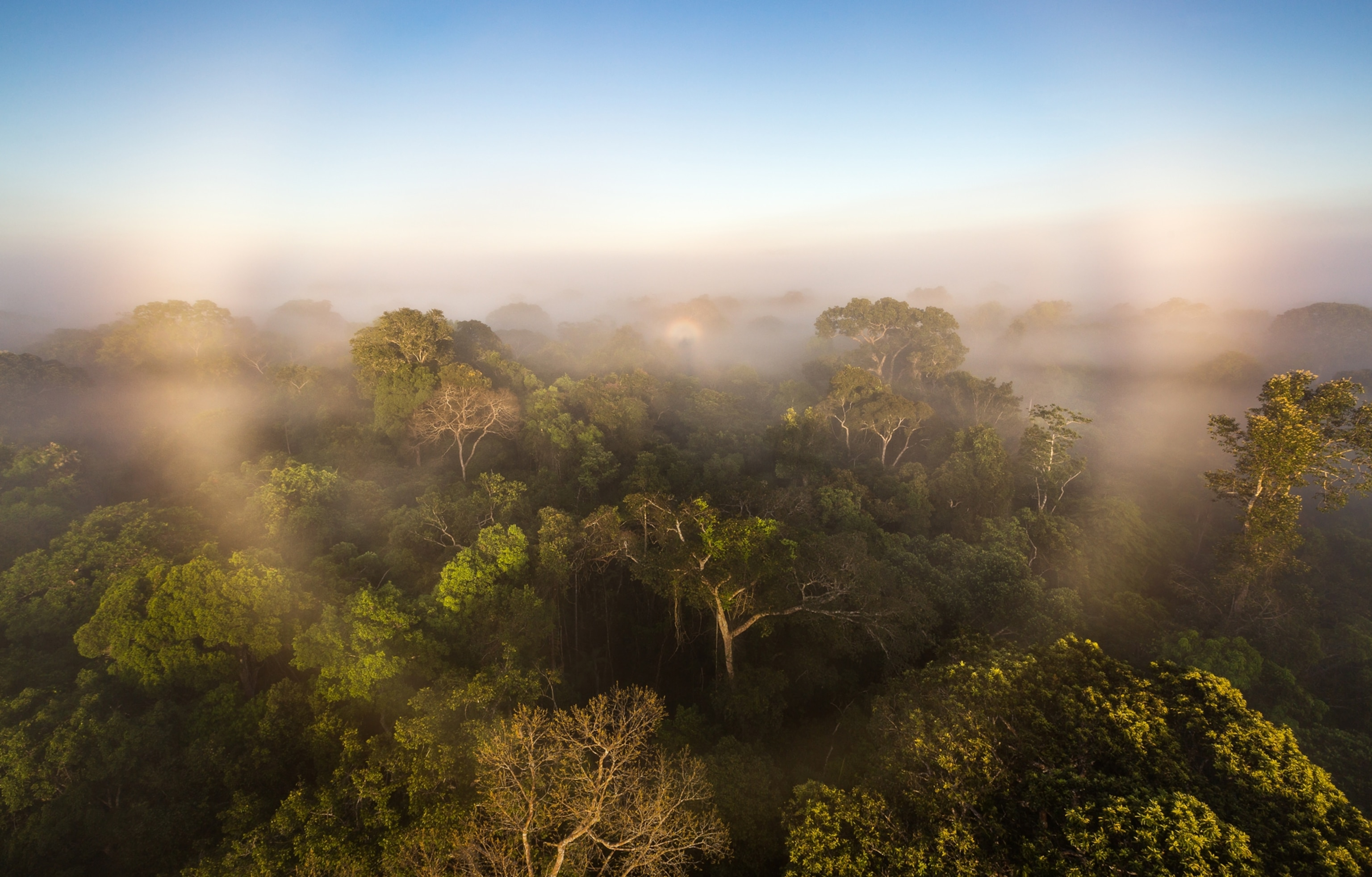 First study of all Amazon greenhouse gases suggests the damaged forest is now worsening climate change