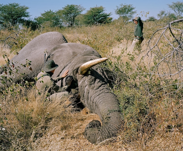 Trophy Hunting May Drive Extinctions, Due to Climate Change