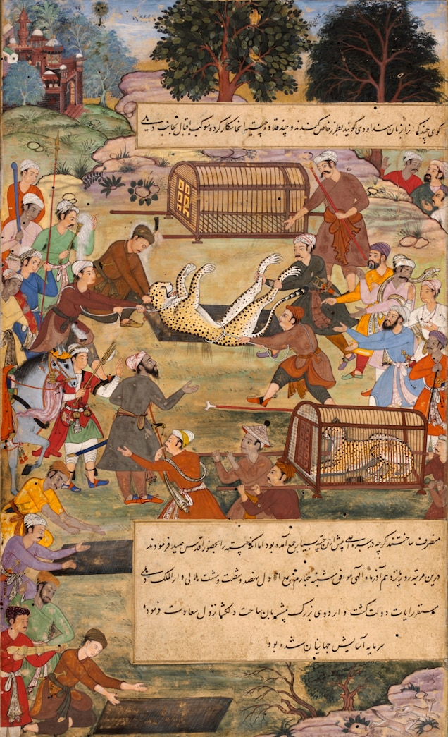 Akbar the Great, a 16th-century ruler of Mughal India, hunted deer with cheetahs, once found across the subcontinent. In a painting from the 1590s, he's capturing wild cheetahs, trapped in pits to be brought to his palace and trained for the hunt.
