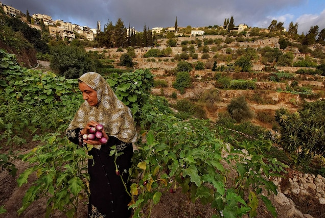 """<p>In the Central Highlands between Nablus and Hebron, a series of ancient terraces, agricultural towers, and a complex irrigation system have been used to cultivate <a href=""""https://whc.unesco.org/en/list/1492"""" target=""""_blank"""">Battir</a> since antiquity. The agricultural practices—still in use today—are some of the oldest farming methods known to humankind.</p> <p>In 2014, the site was listed """"<a href=""""https://whc.unesco.org/en/news/1154/"""" target=""""_blank"""">in danger</a>"""" because of ongoing geo-political transformations in the region. According to UNESCO, Israel's controversial <a href=""""https://www.ochaopt.org/theme/west-bank-barrier"""" target=""""_blank"""">West Bank Barrier</a> """"may isolate farmers from fields they have cultivated for centuries.""""</p>"""