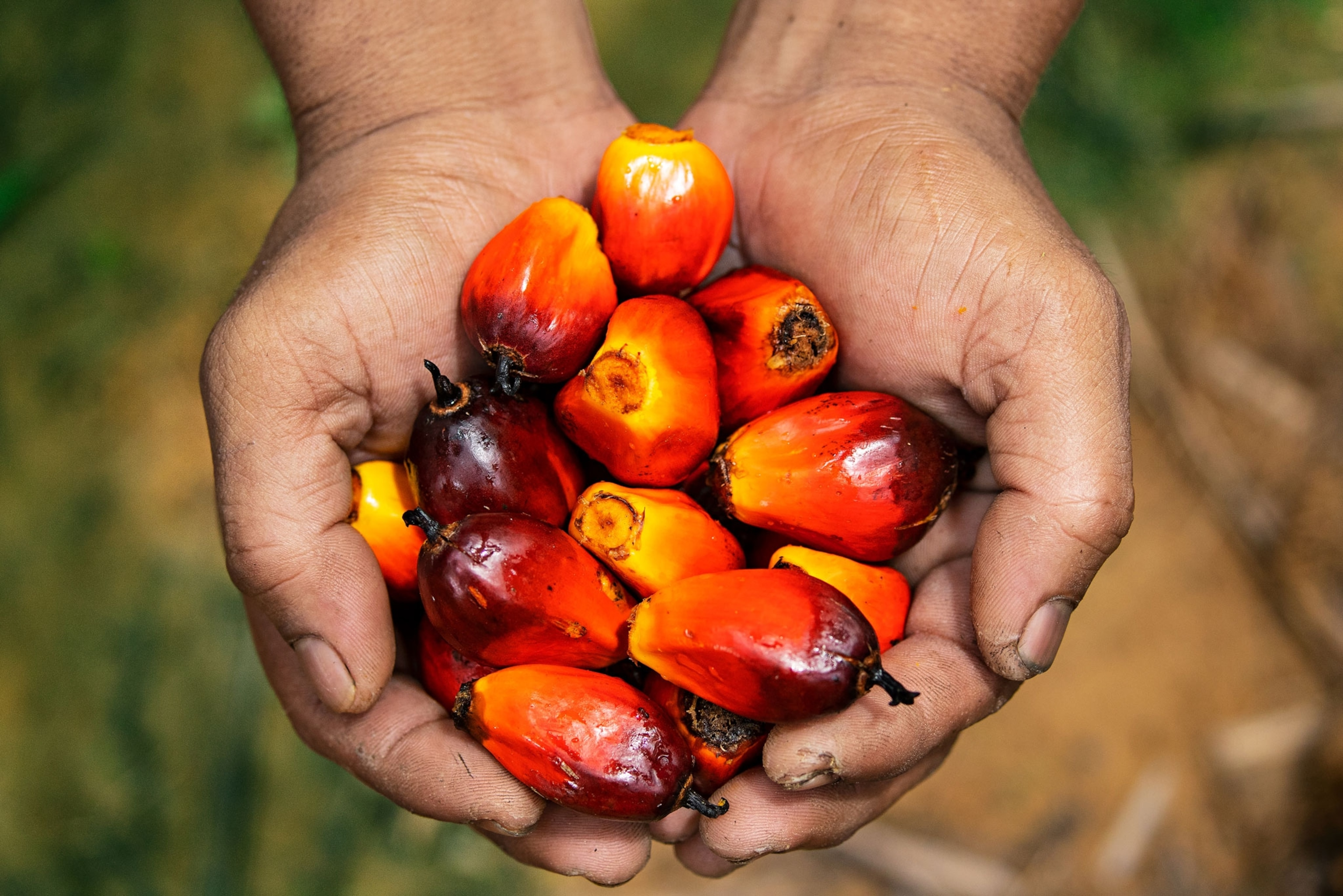 Palm oil is destroying rainforests. But try going a day without it.