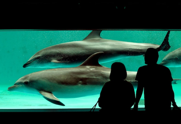 Will Japanese Ban on Taiji Dolphins Stop Notorious Hunts?