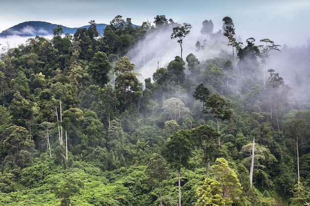 """<p>More than six million acres form Gunung Leuser, Kerinci Seblat, and Bukit Barisan Selatan National Parks—together they are one of the biggest conservation areas in Southeast Asia. <a href=""""https://whc.unesco.org/en/list/1167"""" target=""""_blank"""">Sumatra</a> is biodiversity hot spot, home to both endemic and endangered species, including Sumatran orangutans, Sumatran tigers, rhinos, elephants, and Malayan sun bears.</p> <p>In 2011, the site was placed on the <a href=""""https://whc.unesco.org/en/news/764/"""" target=""""_blank"""">World Heritage in Danger List</a> """"to help overcome threats posed by poaching, illegal logging, agricultural encroachment, and plans to build roads through the site.""""</p>"""