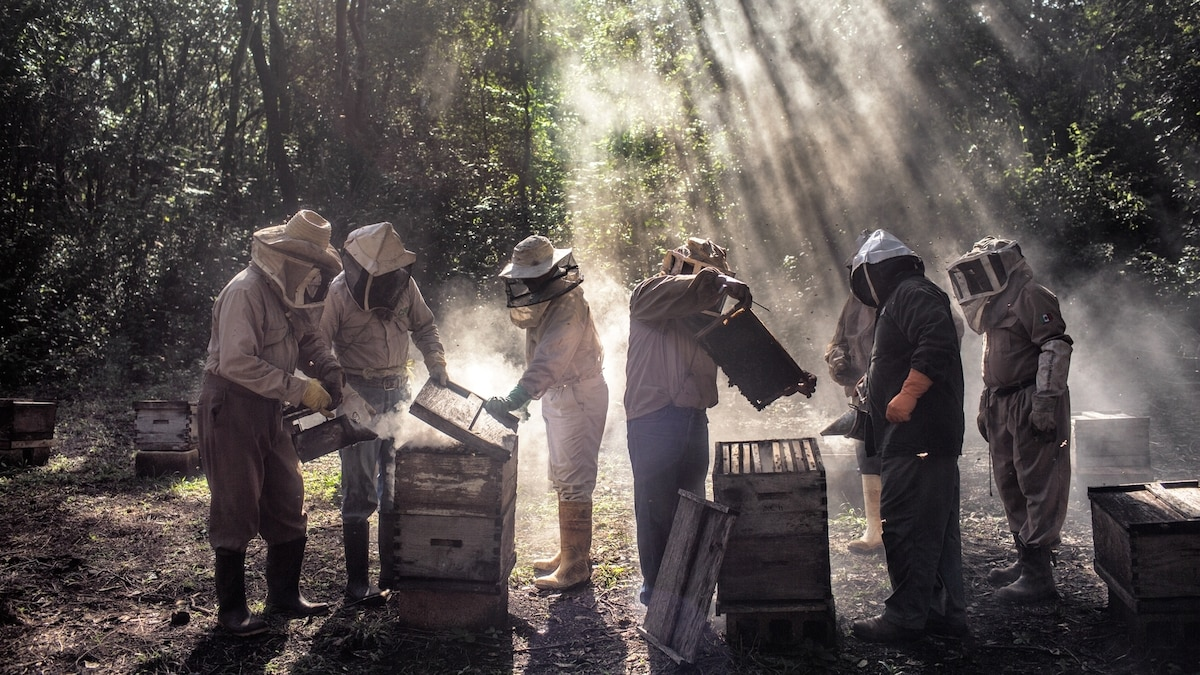 An unlikely feud between beekeepers and Mennonites simmers in Mexico
