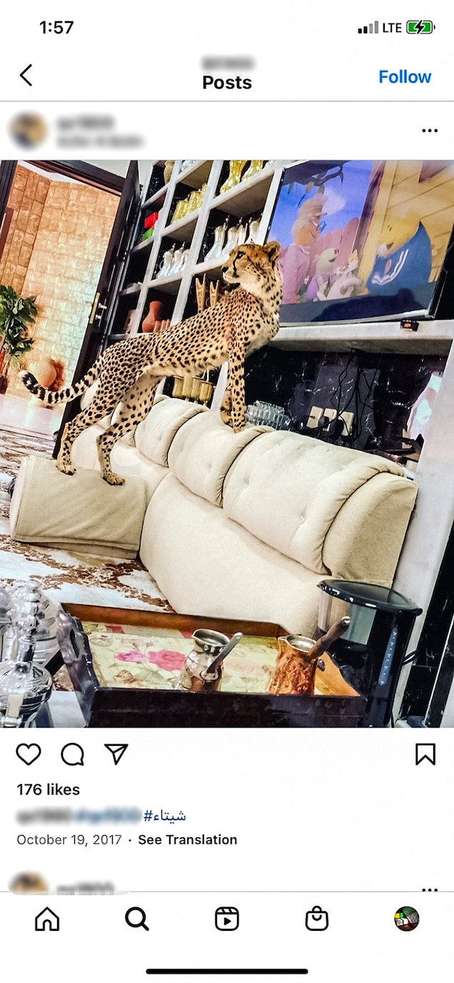 """For those who buy pet cheetahs, """"the novelty wears off quickly, aside from the picture you get,"""" says veterinarian Hollis Stewart, who has cared for captive wildlife in Dubai."""