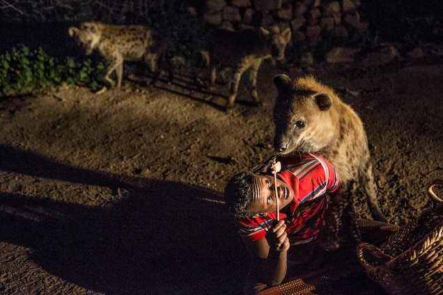 Abbas feeds hyenas outside his home. As well as his generous offerings, the hyenas feast on the city's landfill.