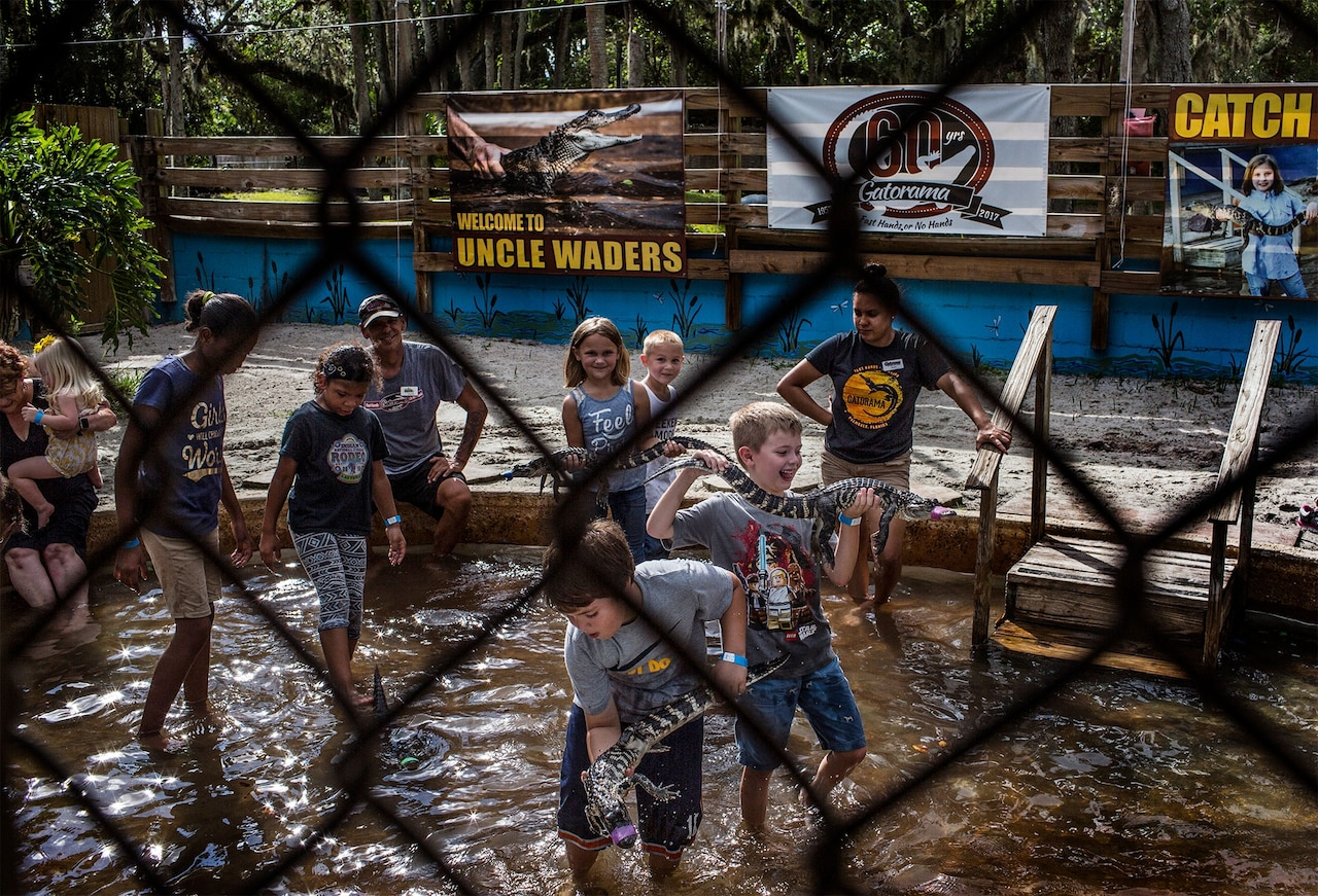 There are a number of ways that kids and families visting Gatorama can have hands-on experiences with the state reptile, including the chance to catch one. Photograph by Kirsten Luce, National Geographic