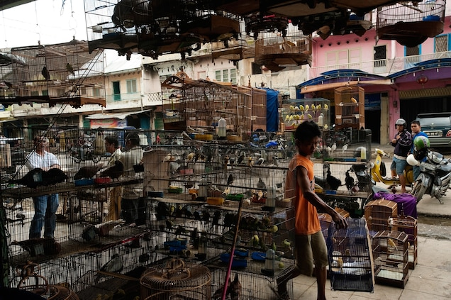 Indonesia's bird markets are notorious for selling protected species of birds and other animals. Photograph by Mark Leong, National Geographic Creative