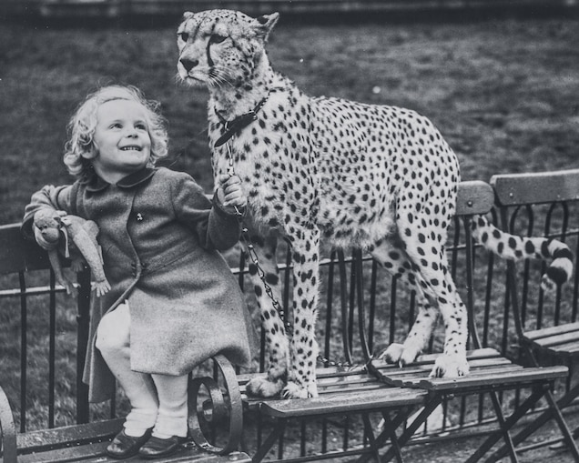 """Four-year-old Phillida Theobald sits in London's Hyde Park with Spot, brought back from Kenya by pilot Guy Wilfred """"Bill"""" Harben before World War II."""