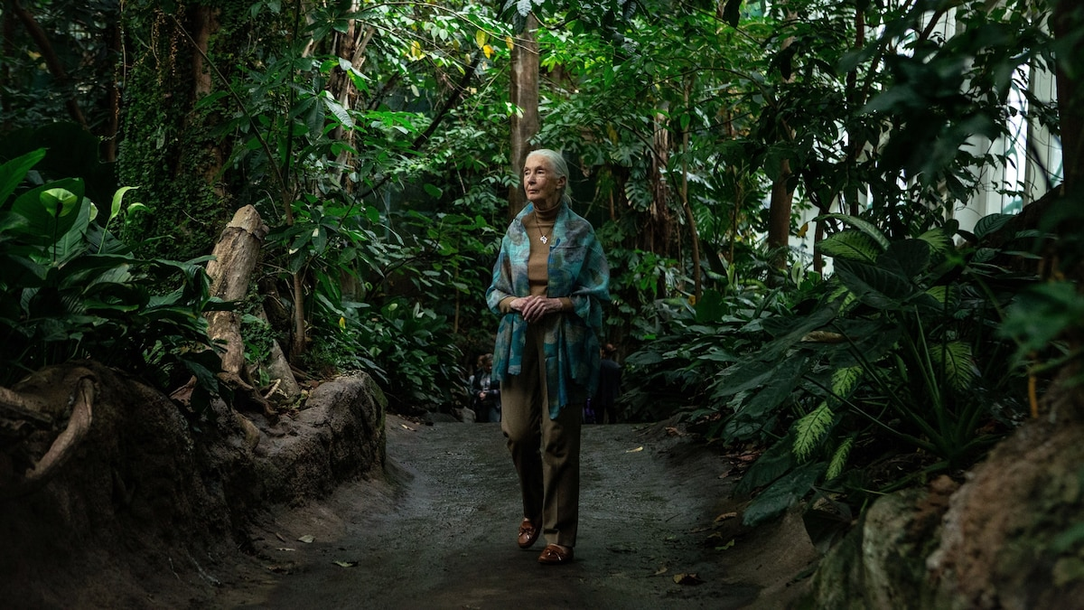 Jane Goodall joins campaign to plant a trillion trees by 2030