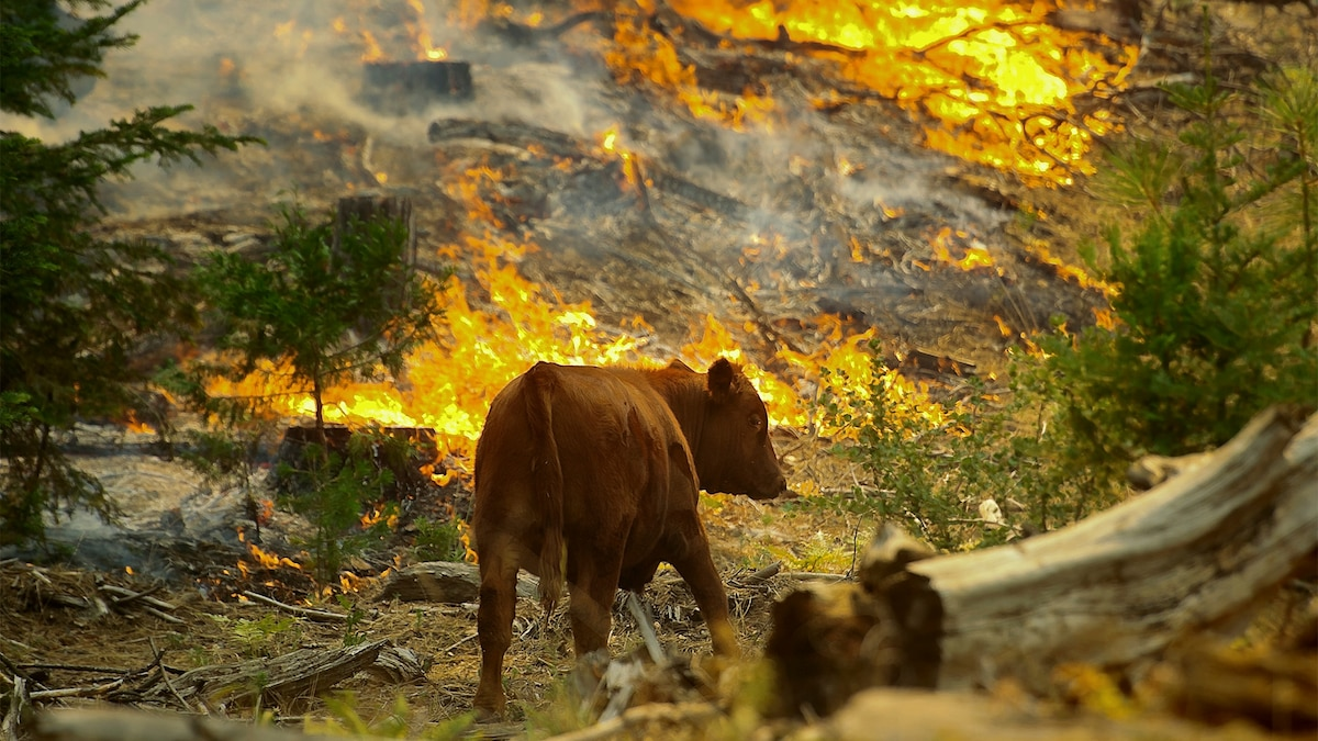 How wild animals cope with wildfires