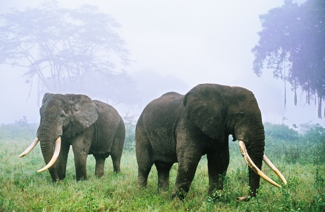 Why Are Most of Tanzania's Elephants Disappearing?