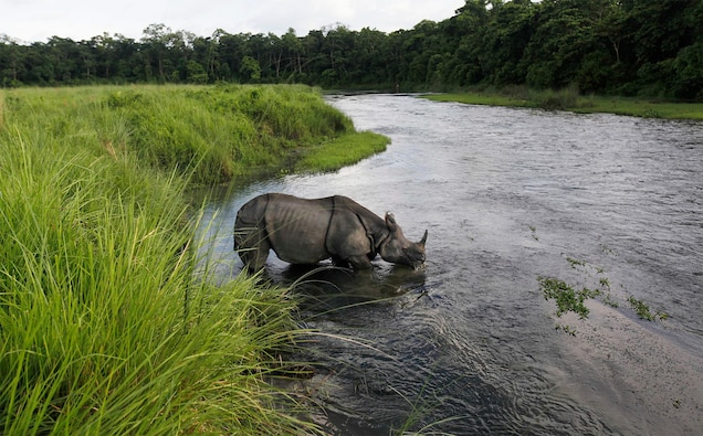 Good News for Animals in Nepal: A Full Year Without Poaching