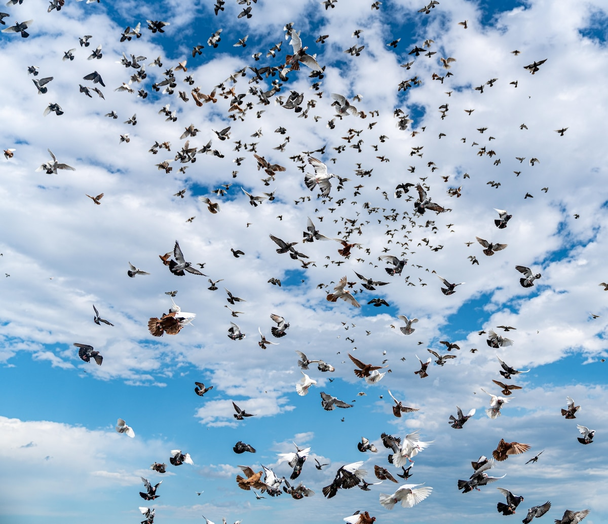 How many birds are there in the world?