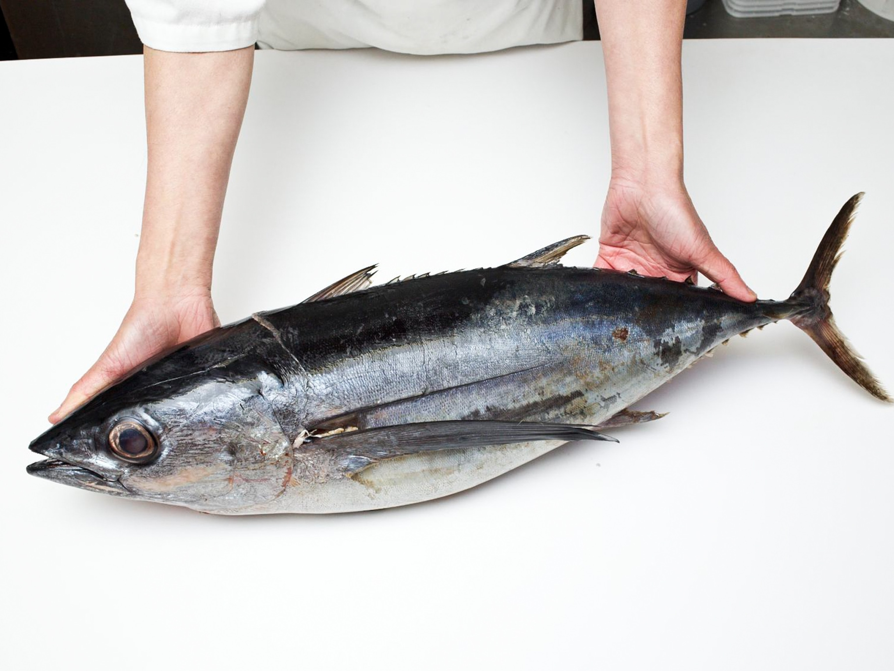 Tuna Lover's Dilemma: To Eat or Not to Eat?