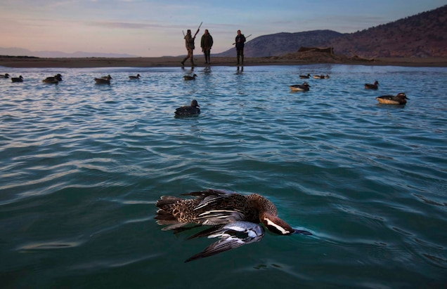 Albanian Government bans hunting of migrating birds