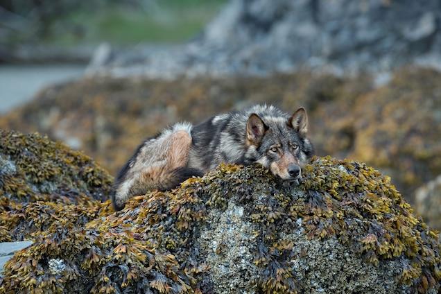 Spectacular Photos Reveal Newly Protected Great Bear Rainforest