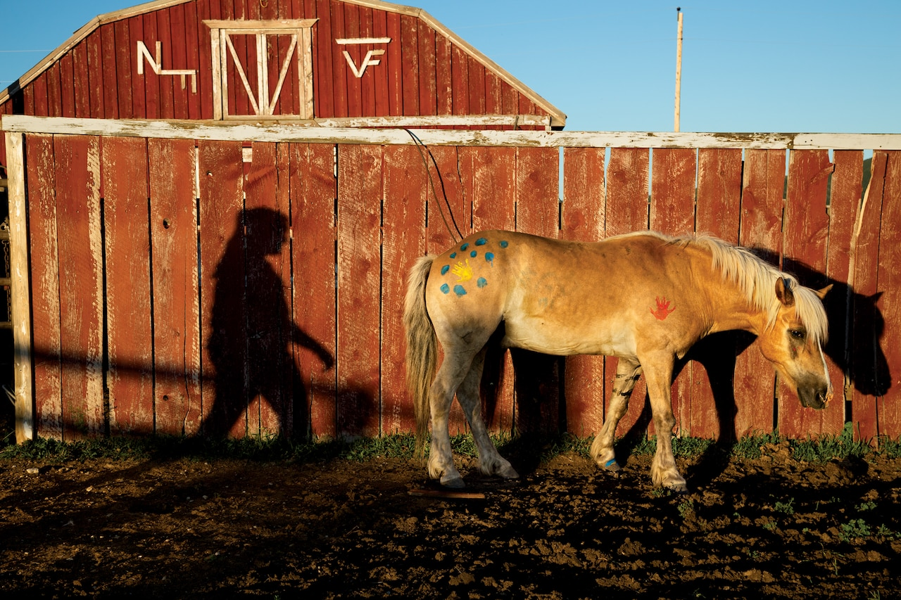 a horse and shadow of a person along a barn wall