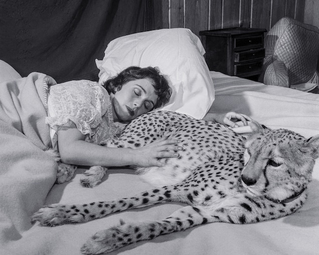 Soprano singer Charlene Chapman is shown with pet cheetah Flossie in her New York State home in 1956.