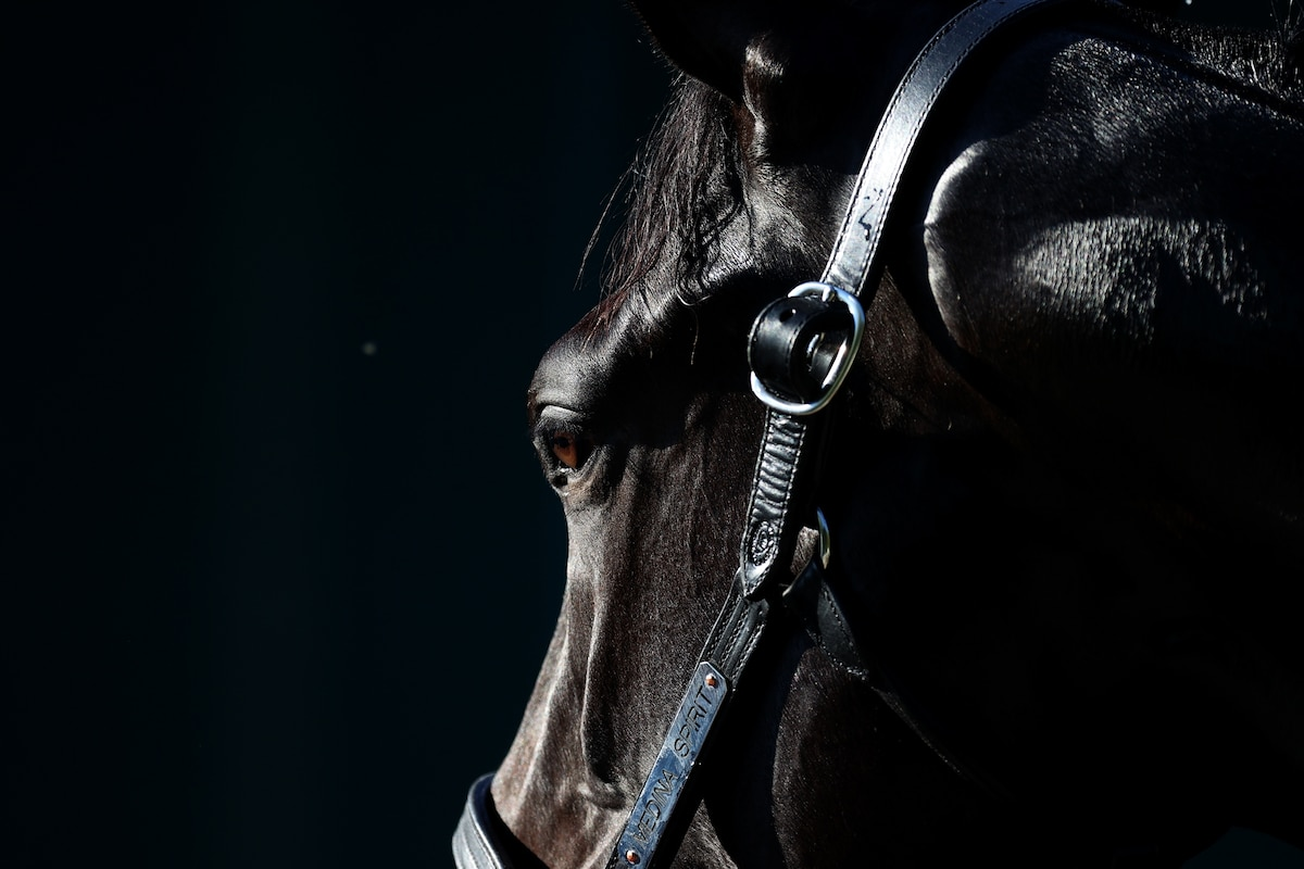 It's Triple Crown season at the racetracks. Here's what to know about horse doping.
