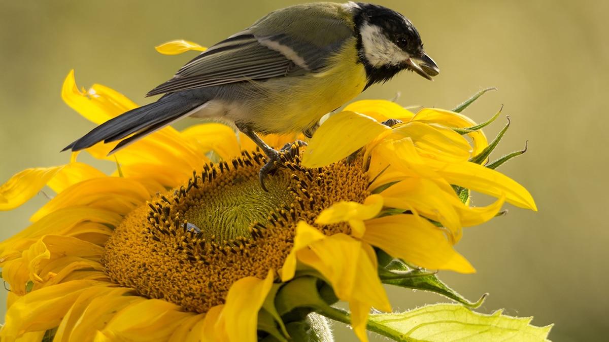 Blue Flower And Little Bird Women/'s Tee Image by Shutterstock