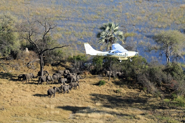 Largest Wildlife Census in History Makes Waves in Conservation