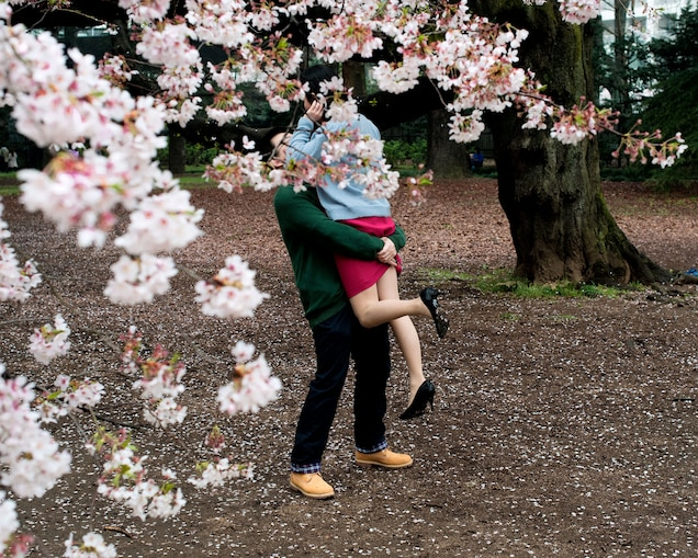 Embrace Spring With Pictures Of Japan S Cherry Blossoms