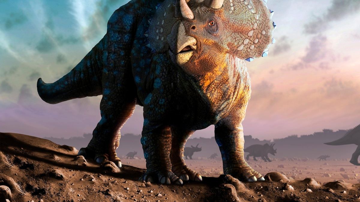 Triceratops horridus, facts and photos