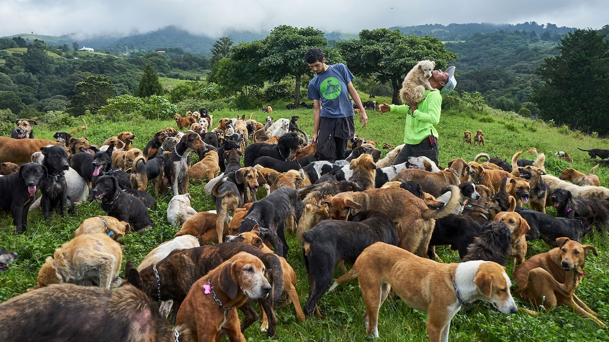 Animal Shelter in Costa Rica Home to 1,000 Stray Dogs