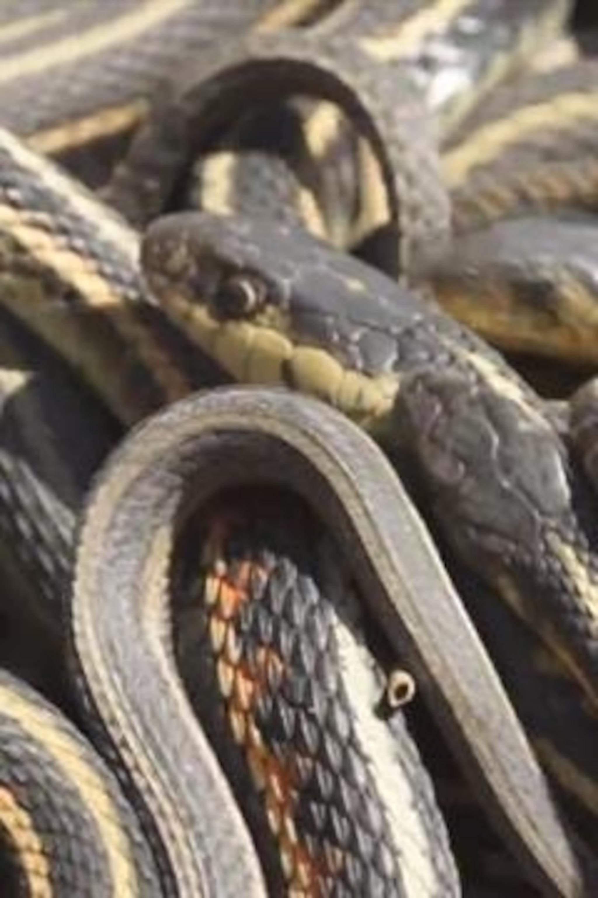 Her vagina in snake Waitress 'caught