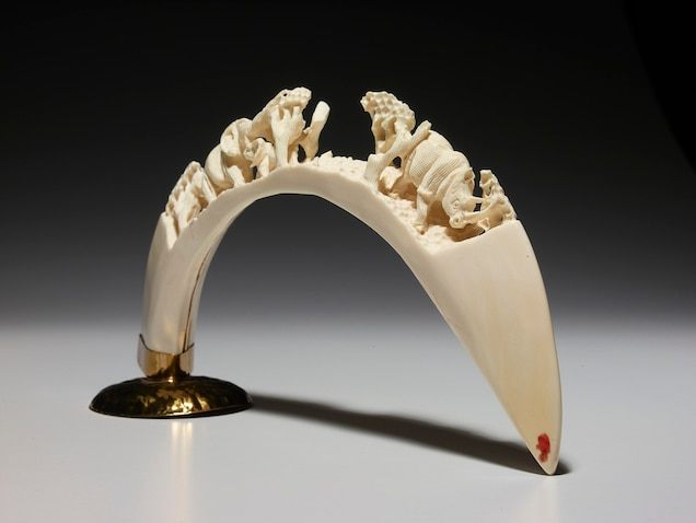 One of the main importers of hippo teeth is Hong Kong, where carvers turn them into art objects. This piece was seized by the U.S. Fish and Wildlife Service. Photograph by Rebecca Hale, National Geographic